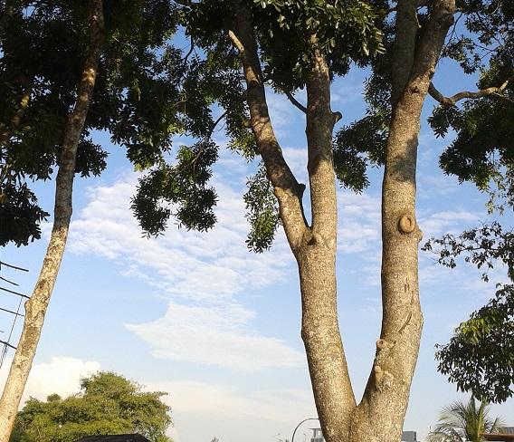 20150518 tree trunks