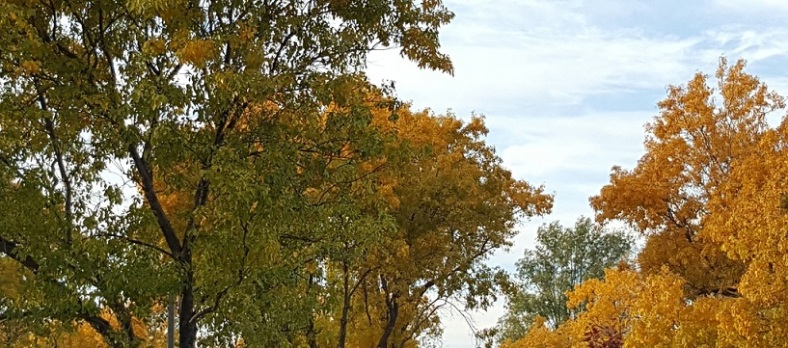 autumn mid-November small